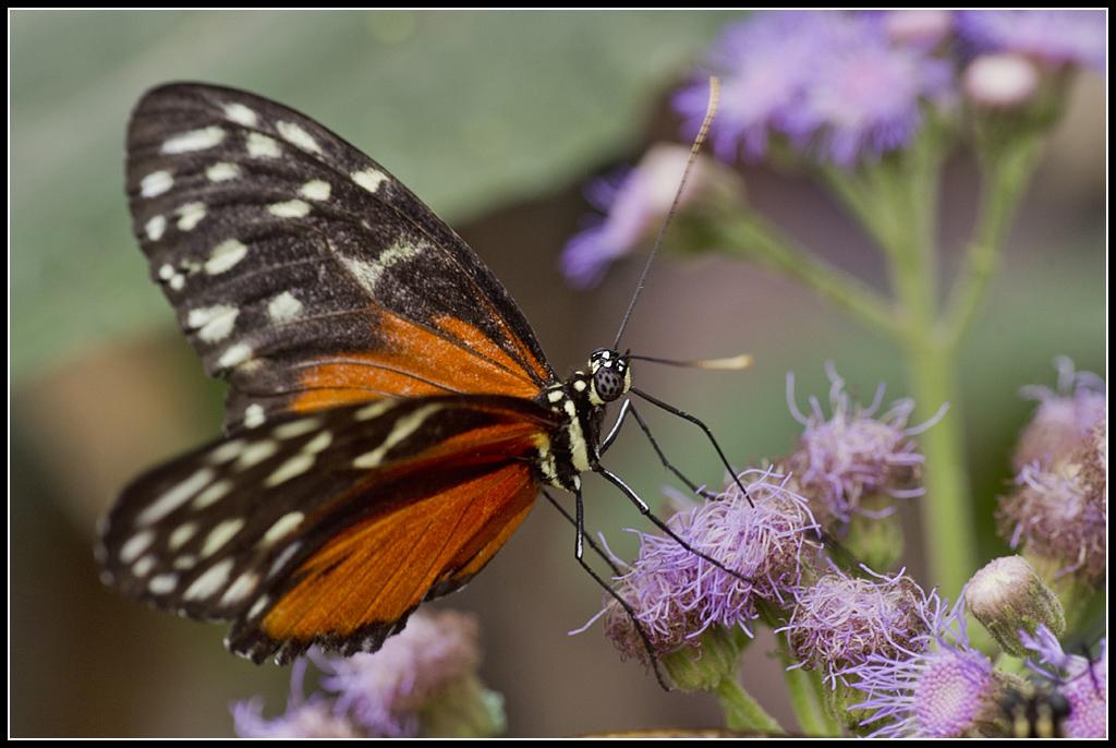 Serre au Papillons 20110410_10h40_Papillons_004