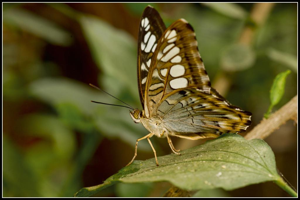 Serre au Papillons 20110410_10h48_Papillons_021