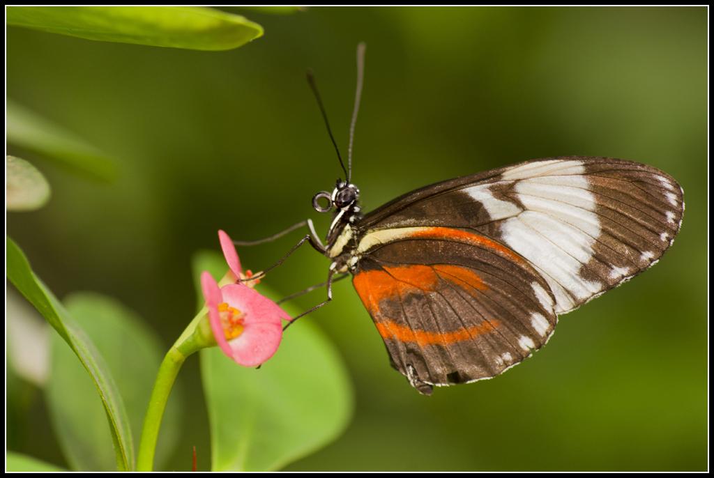 Serre au Papillons 20110410_10h58_Papillons_037
