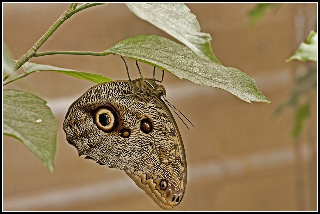 Serre au Papillons 20110410_11h07_Papillons_056