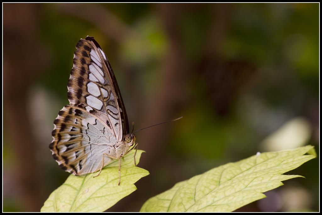 Serre au Papillons 20110410_11h36_Papillons_121